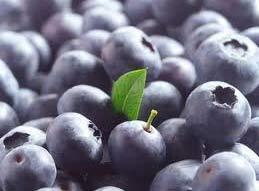 Blauwe Bosbessen bieden tal van gezondheidsvoordelen