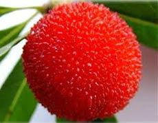 Yang Mei (yumberry) rijk aan zeer krachtige antioxidanten