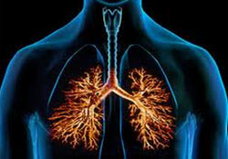 Bronchitis: virus of bacterie?