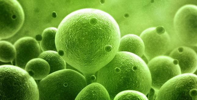 8 voedingsmiddelen die probiotica bevatten