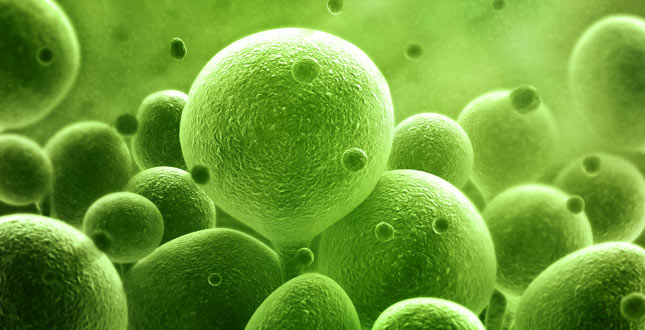 Antioxidanten-probiotica