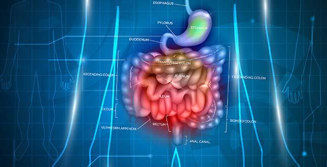 Het optimaliseren van het maag- en darmsysteem