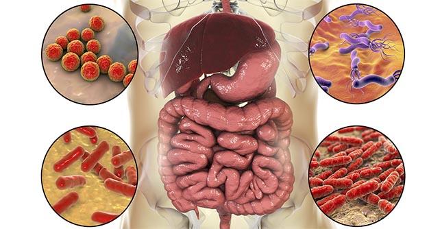 Darmbacteriën kunnen de stemming beïnvloeden en depressie voorkomen